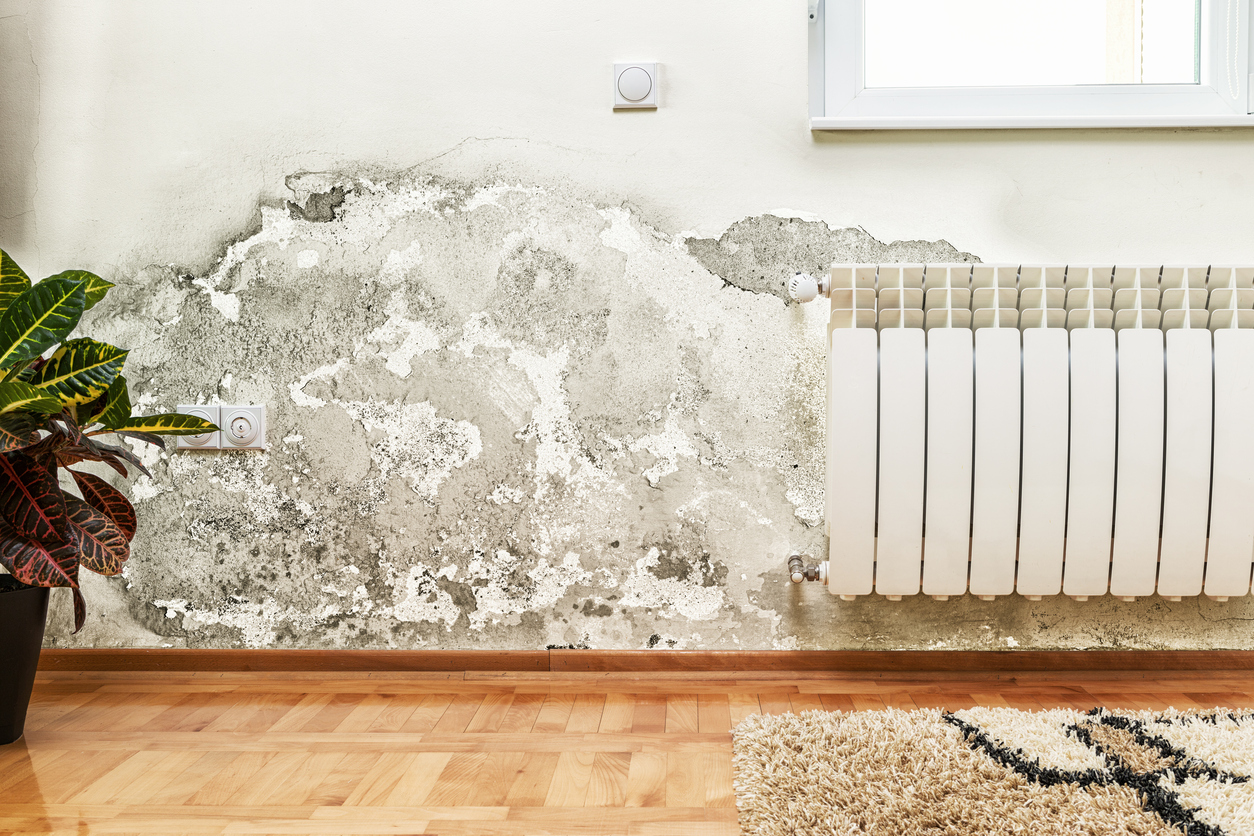 Damage caused by damp Wirral